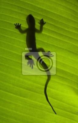 Постер Малайзия Силуэт gecko ящерица на зеленый листМалайзия<br>Постер на холсте или бумаге. Любого нужного вам размера. В раме или без. Подвес в комплекте. Трехслойная надежная упаковка. Доставим в любую точку России. Вам осталось только повесить картину на стену!<br>