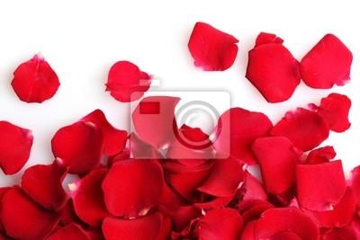 Постер Розы Прекрасные лепестки Красной розы, изолированных на беломРозы<br>Постер на холсте или бумаге. Любого нужного вам размера. В раме или без. Подвес в комплекте. Трехслойная надежная упаковка. Доставим в любую точку России. Вам осталось только повесить картину на стену!<br>