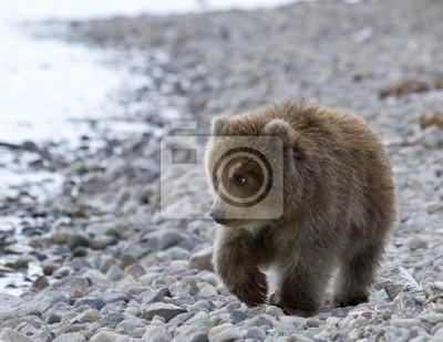 Постер Животные Детеныш медведя, 26x20 см, на бумагеМедведи<br>Постер на холсте или бумаге. Любого нужного вам размера. В раме или без. Подвес в комплекте. Трехслойная надежная упаковка. Доставим в любую точку России. Вам осталось только повесить картину на стену!<br>