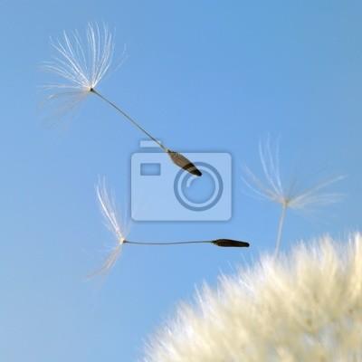 Постер Одуванчики Летят семена одуванчика в голубой назадОдуванчики<br>Постер на холсте или бумаге. Любого нужного вам размера. В раме или без. Подвес в комплекте. Трехслойная надежная упаковка. Доставим в любую точку России. Вам осталось только повесить картину на стену!<br>