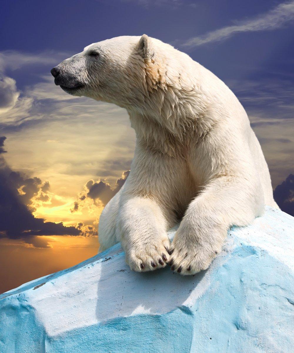 Полярный медведь, 20x24 см, на бумагеМедведи<br>Постер на холсте или бумаге. Любого нужного вам размера. В раме или без. Подвес в комплекте. Трехслойная надежная упаковка. Доставим в любую точку России. Вам осталось только повесить картину на стену!<br>