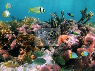 Постер Куба Тропических рыб в коралловых рифовКуба<br>Постер на холсте или бумаге. Любого нужного вам размера. В раме или без. Подвес в комплекте. Трехслойная надежная упаковка. Доставим в любую точку России. Вам осталось только повесить картину на стену!<br>