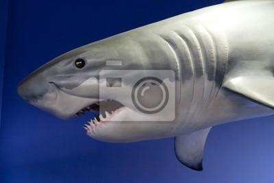 Постер Акулы