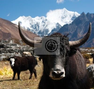 Постер Непал Як в долину Лангтанг с Langshisha Ri mout - НепалНепал<br>Постер на холсте или бумаге. Любого нужного вам размера. В раме или без. Подвес в комплекте. Трехслойная надежная упаковка. Доставим в любую точку России. Вам осталось только повесить картину на стену!<br>