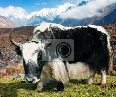 Постер Непал