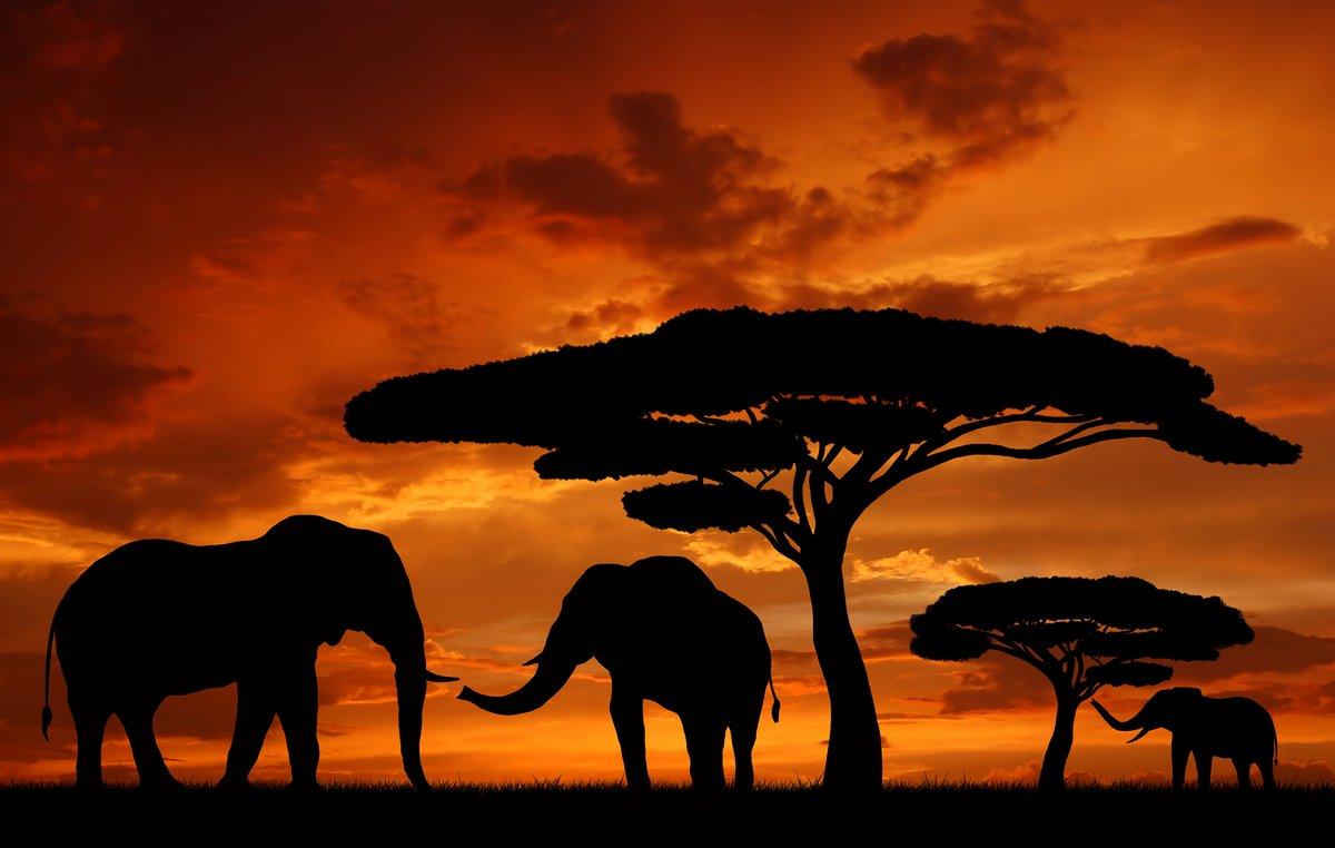 Постер Африканский пейзаж Силуэты слоновАфриканский пейзаж<br>Постер на холсте или бумаге. Любого нужного вам размера. В раме или без. Подвес в комплекте. Трехслойная надежная упаковка. Доставим в любую точку России. Вам осталось только повесить картину на стену!<br>