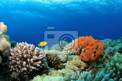 Красочные Кораллы на Красном Море риф, 30x20 см, на бумагеРыбы<br>Постер на холсте или бумаге. Любого нужного вам размера. В раме или без. Подвес в комплекте. Трехслойная надежная упаковка. Доставим в любую точку России. Вам осталось только повесить картину на стену!<br>