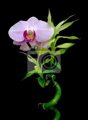 Постер Орхидеи Орхидеи и бамбука на белом фонеОрхидеи<br>Постер на холсте или бумаге. Любого нужного вам размера. В раме или без. Подвес в комплекте. Трехслойная надежная упаковка. Доставим в любую точку России. Вам осталось только повесить картину на стену!<br>