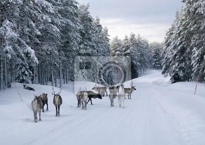 Постер Швеция Оленей на дороге в Северной Швеции зимойШвеция<br>Постер на холсте или бумаге. Любого нужного вам размера. В раме или без. Подвес в комплекте. Трехслойная надежная упаковка. Доставим в любую точку России. Вам осталось только повесить картину на стену!<br>