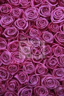 Постер Розы Группа розовые розыРозы<br>Постер на холсте или бумаге. Любого нужного вам размера. В раме или без. Подвес в комплекте. Трехслойная надежная упаковка. Доставим в любую точку России. Вам осталось только повесить картину на стену!<br>