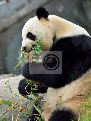Panda, 20x27 см, на бумагеПанда<br>Постер на холсте или бумаге. Любого нужного вам размера. В раме или без. Подвес в комплекте. Трехслойная надежная упаковка. Доставим в любую точку России. Вам осталось только повесить картину на стену!<br>