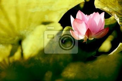 Постер Лотос Красивые Lotus для фона использоватьЛотос<br>Постер на холсте или бумаге. Любого нужного вам размера. В раме или без. Подвес в комплекте. Трехслойная надежная упаковка. Доставим в любую точку России. Вам осталось только повесить картину на стену!<br>
