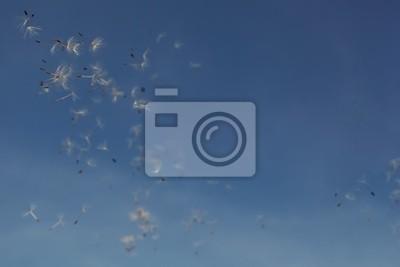 Постер Одуванчики Синее летнее небо с семена одуванчика.Одуванчики<br>Постер на холсте или бумаге. Любого нужного вам размера. В раме или без. Подвес в комплекте. Трехслойная надежная упаковка. Доставим в любую точку России. Вам осталось только повесить картину на стену!<br>