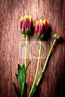 Постер Астры Крупным планом Aster цветы на деревянной фонаАстры<br>Постер на холсте или бумаге. Любого нужного вам размера. В раме или без. Подвес в комплекте. Трехслойная надежная упаковка. Доставим в любую точку России. Вам осталось только повесить картину на стену!<br>