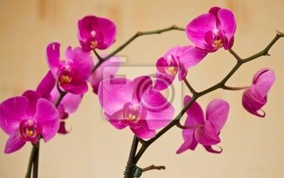 Постер Орхидеи Цветы фаленопсисаОрхидеи<br>Постер на холсте или бумаге. Любого нужного вам размера. В раме или без. Подвес в комплекте. Трехслойная надежная упаковка. Доставим в любую точку России. Вам осталось только повесить картину на стену!<br>