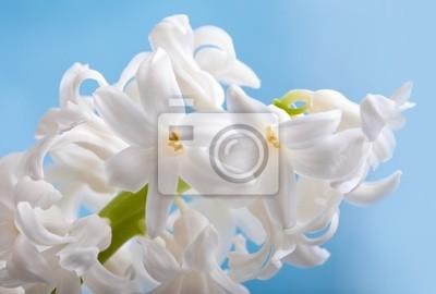 Постер Гиацинты Красивый цветок гиацинтГиацинты<br>Постер на холсте или бумаге. Любого нужного вам размера. В раме или без. Подвес в комплекте. Трехслойная надежная упаковка. Доставим в любую точку России. Вам осталось только повесить картину на стену!<br>