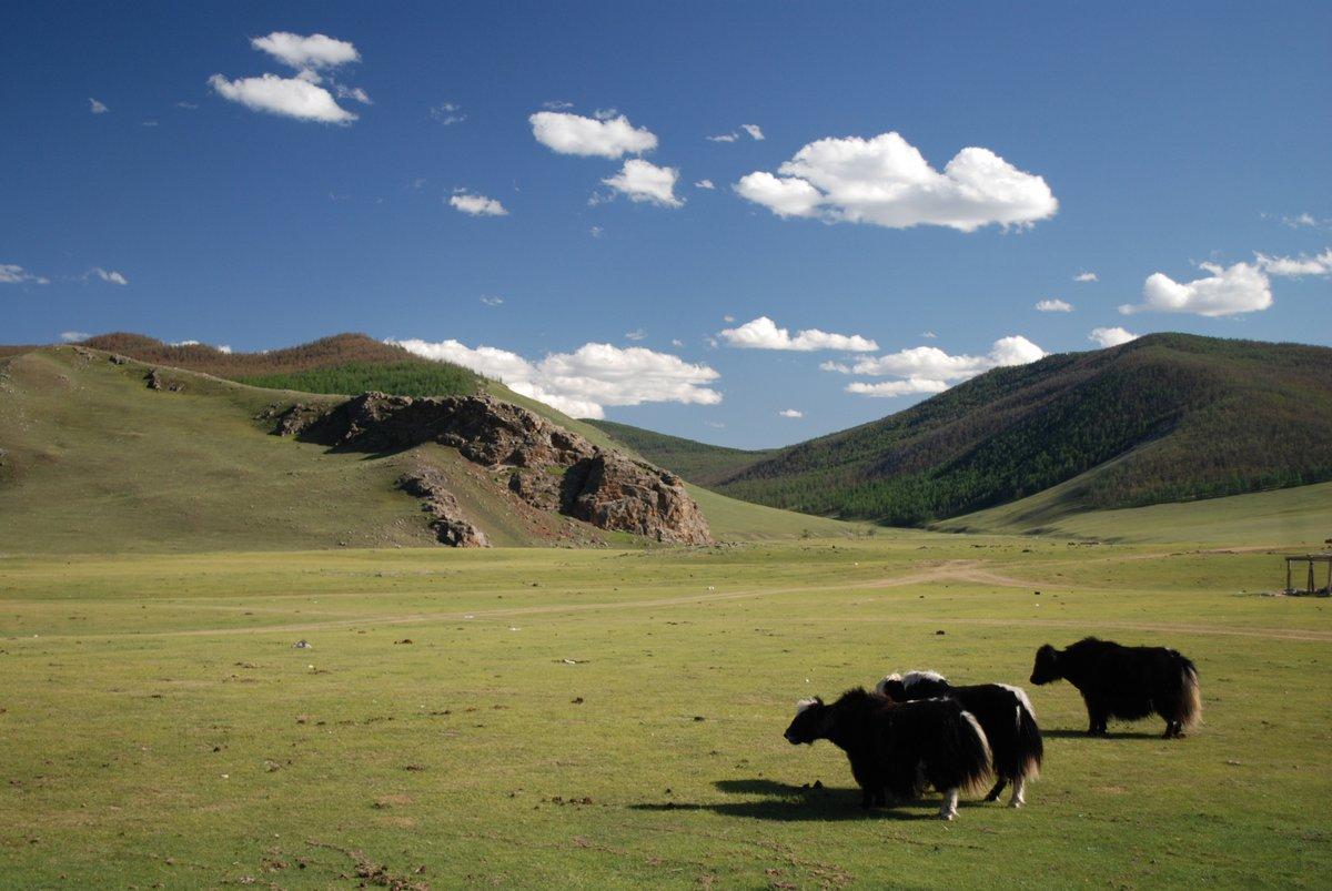 Постер Монголия Yacks, MongolieМонголия<br>Постер на холсте или бумаге. Любого нужного вам размера. В раме или без. Подвес в комплекте. Трехслойная надежная упаковка. Доставим в любую точку России. Вам осталось только повесить картину на стену!<br>
