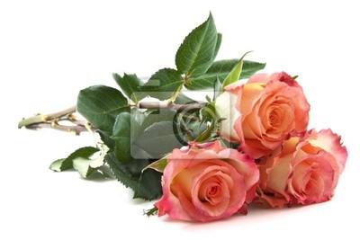 Постер Цветы Прекрасные розы, 30x20 см, на бумагеРозы<br>Постер на холсте или бумаге. Любого нужного вам размера. В раме или без. Подвес в комплекте. Трехслойная надежная упаковка. Доставим в любую точку России. Вам осталось только повесить картину на стену!<br>