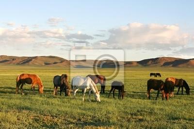 Постер Монголия Табун лошадейМонголия<br>Постер на холсте или бумаге. Любого нужного вам размера. В раме или без. Подвес в комплекте. Трехслойная надежная упаковка. Доставим в любую точку России. Вам осталось только повесить картину на стену!<br>