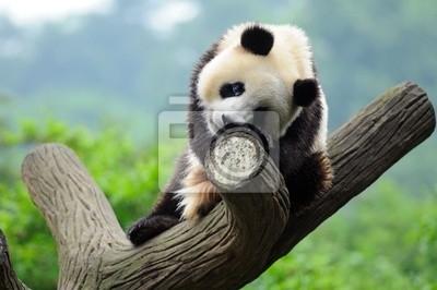 Постер Панда Гигантский медведь панда в деревоПанда<br>Постер на холсте или бумаге. Любого нужного вам размера. В раме или без. Подвес в комплекте. Трехслойная надежная упаковка. Доставим в любую точку России. Вам осталось только повесить картину на стену!<br>
