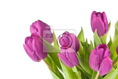 Постер Тюльпаны Розовые тюльпаныТюльпаны<br>Постер на холсте или бумаге. Любого нужного вам размера. В раме или без. Подвес в комплекте. Трехслойная надежная упаковка. Доставим в любую точку России. Вам осталось только повесить картину на стену!<br>