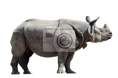 Постер Животные Rhinoceros unicornis, 30x20 см, на бумагеНосороги<br>Постер на холсте или бумаге. Любого нужного вам размера. В раме или без. Подвес в комплекте. Трехслойная надежная упаковка. Доставим в любую точку России. Вам осталось только повесить картину на стену!<br>