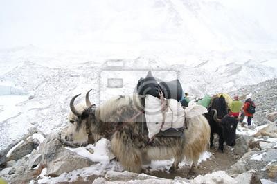 Постер Непал Эверест trekНепал<br>Постер на холсте или бумаге. Любого нужного вам размера. В раме или без. Подвес в комплекте. Трехслойная надежная упаковка. Доставим в любую точку России. Вам осталось только повесить картину на стену!<br>