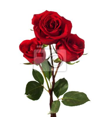 Постер Розы Три темно-красных роз, изолированных на беломРозы<br>Постер на холсте или бумаге. Любого нужного вам размера. В раме или без. Подвес в комплекте. Трехслойная надежная упаковка. Доставим в любую точку России. Вам осталось только повесить картину на стену!<br>