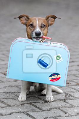 Постер Собаки Постер 39665227, 20x30 см, на бумагеСобаки<br>Постер на холсте или бумаге. Любого нужного вам размера. В раме или без. Подвес в комплекте. Трехслойная надежная упаковка. Доставим в любую точку России. Вам осталось только повесить картину на стену!<br>