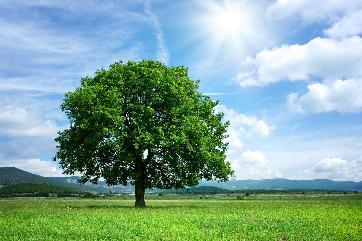Постер Весна Дерево на зеленом полеВесна<br>Постер на холсте или бумаге. Любого нужного вам размера. В раме или без. Подвес в комплекте. Трехслойная надежная упаковка. Доставим в любую точку России. Вам осталось только повесить картину на стену!<br>