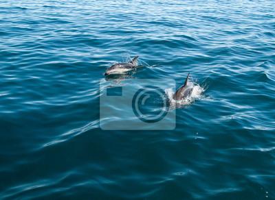 Постер Подводный мир Banc de dauphins,, 27x20 см, на бумагеДельфины<br>Постер на холсте или бумаге. Любого нужного вам размера. В раме или без. Подвес в комплекте. Трехслойная надежная упаковка. Доставим в любую точку России. Вам осталось только повесить картину на стену!<br>