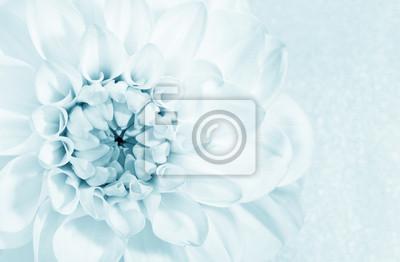 Постер Георгины Красивый цветок георгинаГеоргины<br>Постер на холсте или бумаге. Любого нужного вам размера. В раме или без. Подвес в комплекте. Трехслойная надежная упаковка. Доставим в любую точку России. Вам осталось только повесить картину на стену!<br>