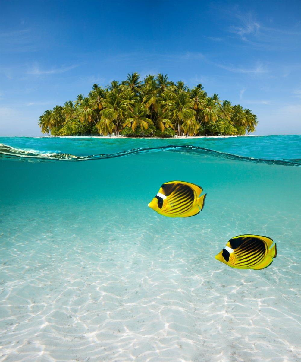 Постер Пейзаж морской Пальмовый остров и подводный мирПейзаж морской<br>Постер на холсте или бумаге. Любого нужного вам размера. В раме или без. Подвес в комплекте. Трехслойная надежная упаковка. Доставим в любую точку России. Вам осталось только повесить картину на стену!<br>