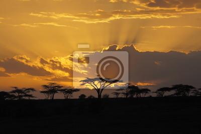 Постер Африканский пейзаж Закат в АфрикеАфриканский пейзаж<br>Постер на холсте или бумаге. Любого нужного вам размера. В раме или без. Подвес в комплекте. Трехслойная надежная упаковка. Доставим в любую точку России. Вам осталось только повесить картину на стену!<br>