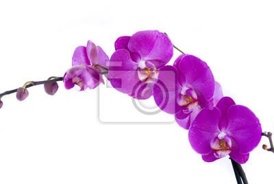 Постер Орхидеи ОрхидеяОрхидеи<br>Постер на холсте или бумаге. Любого нужного вам размера. В раме или без. Подвес в комплекте. Трехслойная надежная упаковка. Доставим в любую точку России. Вам осталось только повесить картину на стену!<br>