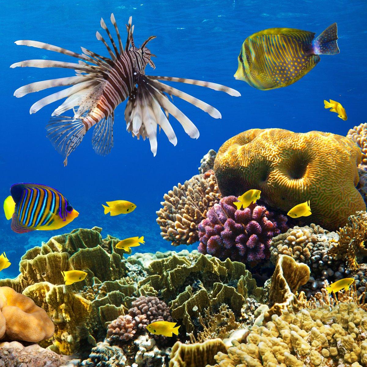 Постер Египет Колонии кораллов и коралловых рыбЕгипет<br>Постер на холсте или бумаге. Любого нужного вам размера. В раме или без. Подвес в комплекте. Трехслойная надежная упаковка. Доставим в любую точку России. Вам осталось только повесить картину на стену!<br>