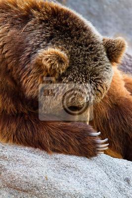 Постер Животные Бурый медведь, 20x30 см, на бумагеМедведи<br>Постер на холсте или бумаге. Любого нужного вам размера. В раме или без. Подвес в комплекте. Трехслойная надежная упаковка. Доставим в любую точку России. Вам осталось только повесить картину на стену!<br>