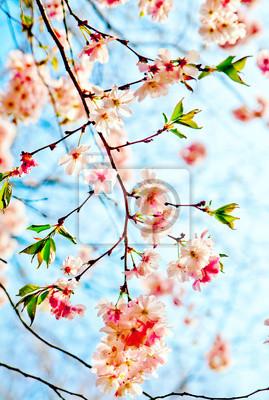 Постер Сакура Сакура цвели цветы. Красивые розовые cherry blossomСакура<br>Постер на холсте или бумаге. Любого нужного вам размера. В раме или без. Подвес в комплекте. Трехслойная надежная упаковка. Доставим в любую точку России. Вам осталось только повесить картину на стену!<br>