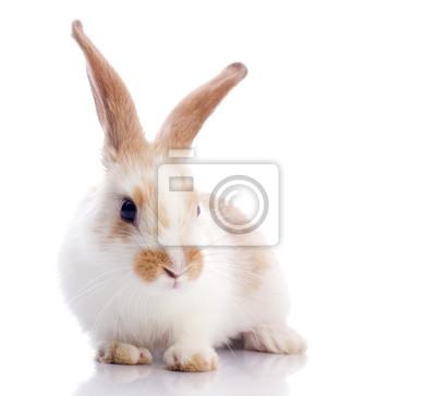 Постер Кролики Забавный кроликКролики<br>Постер на холсте или бумаге. Любого нужного вам размера. В раме или без. Подвес в комплекте. Трехслойная надежная упаковка. Доставим в любую точку России. Вам осталось только повесить картину на стену!<br>