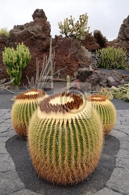 Постер Кактусы Echinocactus grusonii кактус в Лансароте-паркКактусы<br>Постер на холсте или бумаге. Любого нужного вам размера. В раме или без. Подвес в комплекте. Трехслойная надежная упаковка. Доставим в любую точку России. Вам осталось только повесить картину на стену!<br>