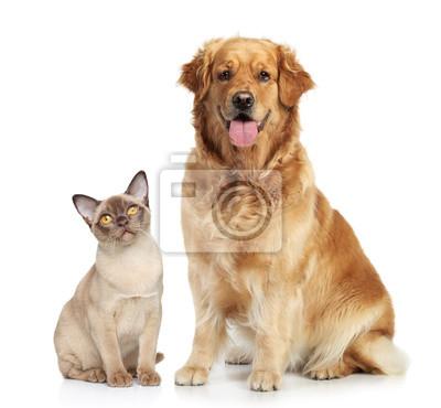 Постер Собаки Кошка и собака вместеСобаки<br>Постер на холсте или бумаге. Любого нужного вам размера. В раме или без. Подвес в комплекте. Трехслойная надежная упаковка. Доставим в любую точку России. Вам осталось только повесить картину на стену!<br>