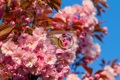 Постер Сакура Красивые розовые вишневых дереваСакура<br>Постер на холсте или бумаге. Любого нужного вам размера. В раме или без. Подвес в комплекте. Трехслойная надежная упаковка. Доставим в любую точку России. Вам осталось только повесить картину на стену!<br>