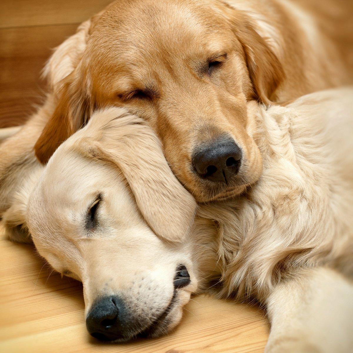 Постер Животные Вид двух собак лежа, 20x20 см, на бумагеСобаки<br>Постер на холсте или бумаге. Любого нужного вам размера. В раме или без. Подвес в комплекте. Трехслойная надежная упаковка. Доставим в любую точку России. Вам осталось только повесить картину на стену!<br>
