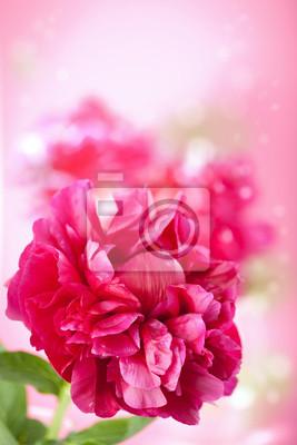 Постер Пионы Розовый цветок пионПионы<br>Постер на холсте или бумаге. Любого нужного вам размера. В раме или без. Подвес в комплекте. Трехслойная надежная упаковка. Доставим в любую точку России. Вам осталось только повесить картину на стену!<br>