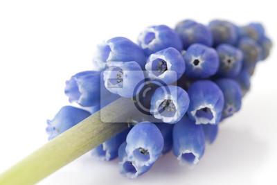 Постер Гиацинты Один синий виноград гиацинтГиацинты<br>Постер на холсте или бумаге. Любого нужного вам размера. В раме или без. Подвес в комплекте. Трехслойная надежная упаковка. Доставим в любую точку России. Вам осталось только повесить картину на стену!<br>