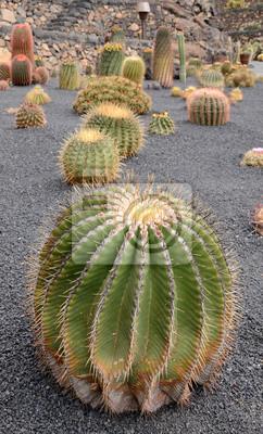 Постер Кактусы Разнообразные тропические кактусов в Lanzarote parkКактусы<br>Постер на холсте или бумаге. Любого нужного вам размера. В раме или без. Подвес в комплекте. Трехслойная надежная упаковка. Доставим в любую точку России. Вам осталось только повесить картину на стену!<br>