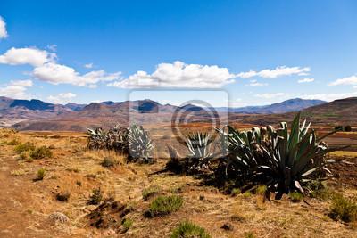 Постер Кактусы Cactusus в пустынном горном ландшафтеКактусы<br>Постер на холсте или бумаге. Любого нужного вам размера. В раме или без. Подвес в комплекте. Трехслойная надежная упаковка. Доставим в любую точку России. Вам осталось только повесить картину на стену!<br>