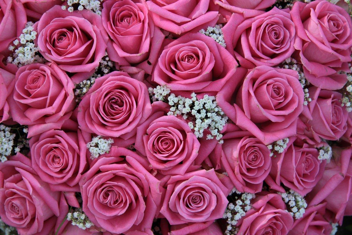 Постер Розы Розовые розы и белые gypsophilaРозы<br>Постер на холсте или бумаге. Любого нужного вам размера. В раме или без. Подвес в комплекте. Трехслойная надежная упаковка. Доставим в любую точку России. Вам осталось только повесить картину на стену!<br>