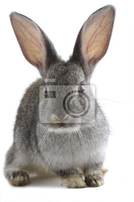 Серый кролик, 20x30 см, на бумагеКролики<br>Постер на холсте или бумаге. Любого нужного вам размера. В раме или без. Подвес в комплекте. Трехслойная надежная упаковка. Доставим в любую точку России. Вам осталось только повесить картину на стену!<br>