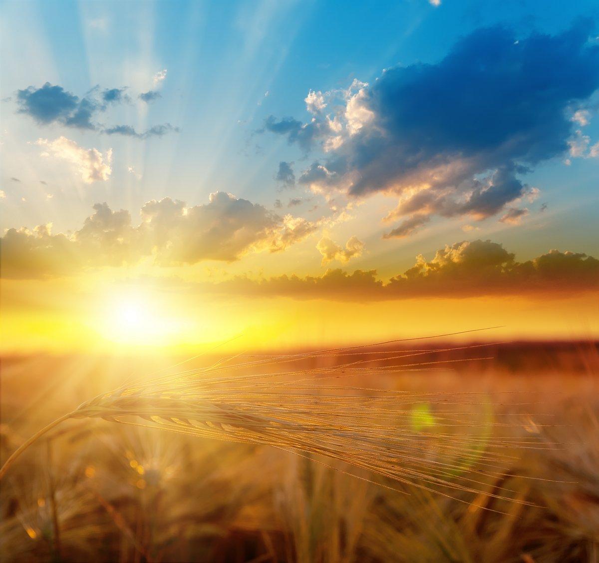 Постер Лето Золотой закат солнца в поле с ячменемЛето<br>Постер на холсте или бумаге. Любого нужного вам размера. В раме или без. Подвес в комплекте. Трехслойная надежная упаковка. Доставим в любую точку России. Вам осталось только повесить картину на стену!<br>